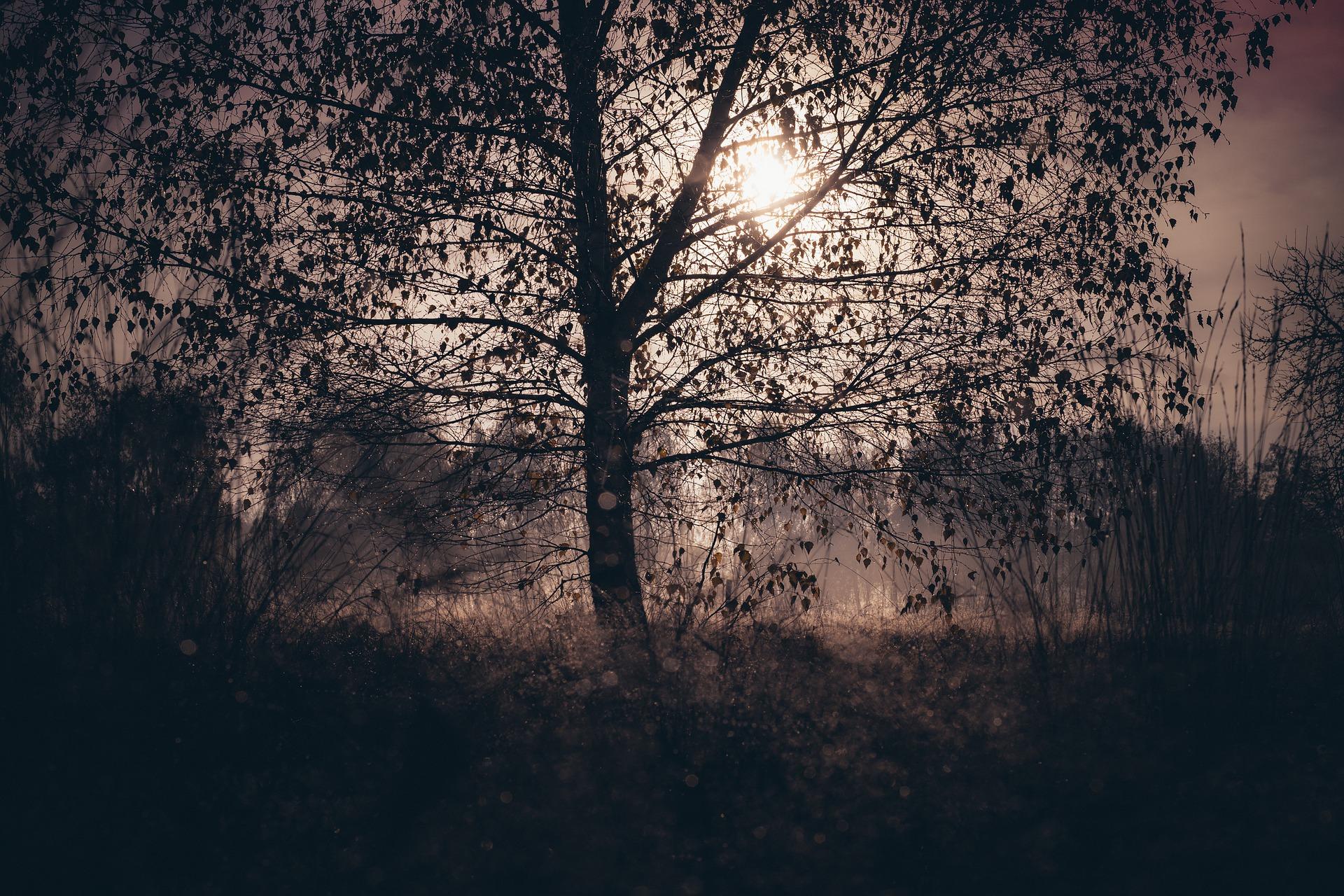 tree-4594095_1920